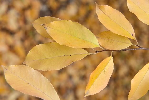 Helder geel blad aan de tak