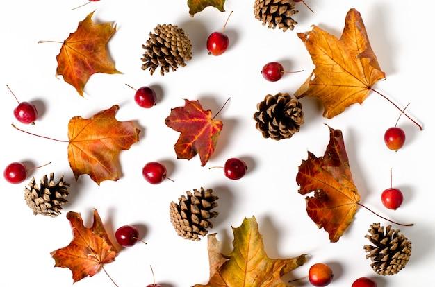 Helder gele herfstbladeren, kastanjes, dennenappels en oranje physalis bloemen