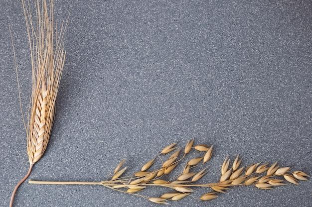 Helder gele oren van tarwe en gerst op de achtergrond van grijs graniet.