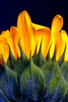 Helder gele zonnebloem achtergrond
