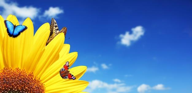 Helder gele zonnebloem met vlinder op een zonnige zomerochtend.