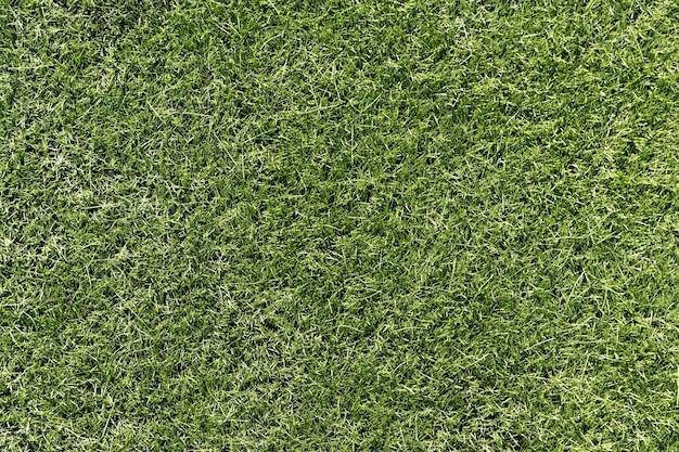 Helder groen gras. achtergrond voor ontwerp. hoge kwaliteit foto