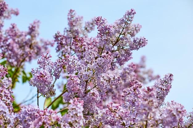 Helder lila bloemen op zonnige zomerdag.
