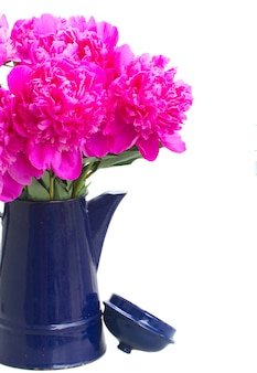 Helder roze pioen bloeit boeket in blauwe pot close-up geïsoleerd op wit