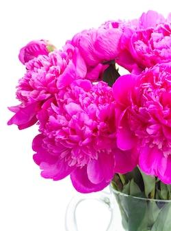 Helder roze pioen bloemen boeket close-up geïsoleerd op wit