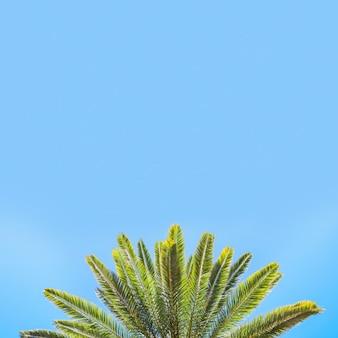 Heldere bladeren van palm