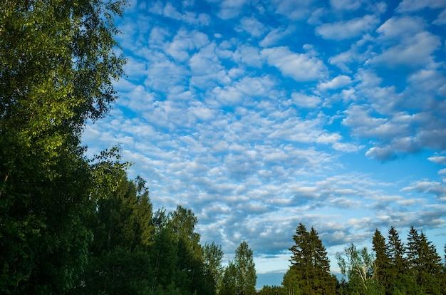 Heldere blauwe lucht met witte wolken tegen de achtergrond van groene bomen. achtergrond met kopie ruimte.