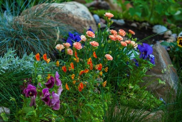 Heldere bloemen bloeien op bloembed, ideeën voor bloementuinen