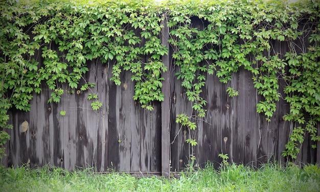 Heldere foto van houten poorten op het platteland met vegetatie