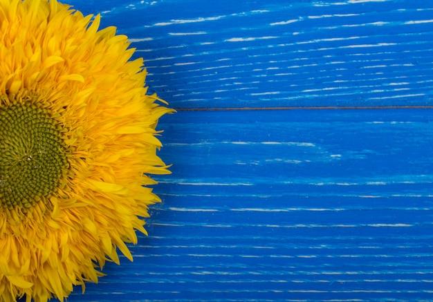 Heldere gele zonnebloem op een blauwe houten achtergrond