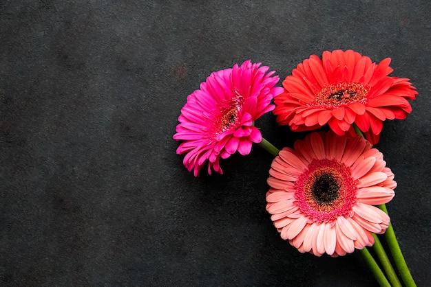 Heldere gerbera's bloemen op een zwarte concrete achtergrond