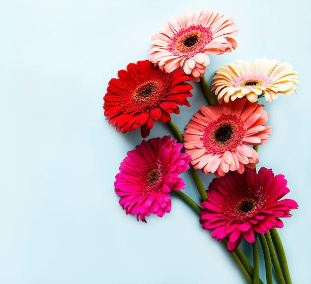 Heldere gerberabloemen op een pastelkleurblauw