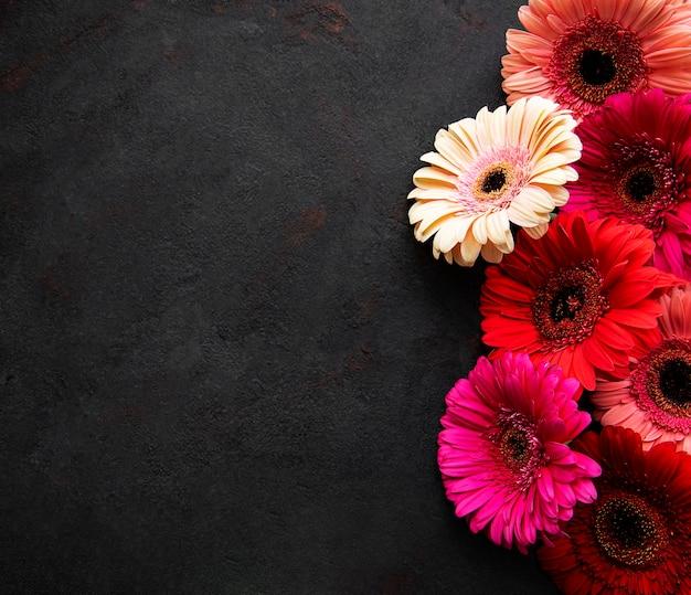 Heldere gerberabloemen op zwart