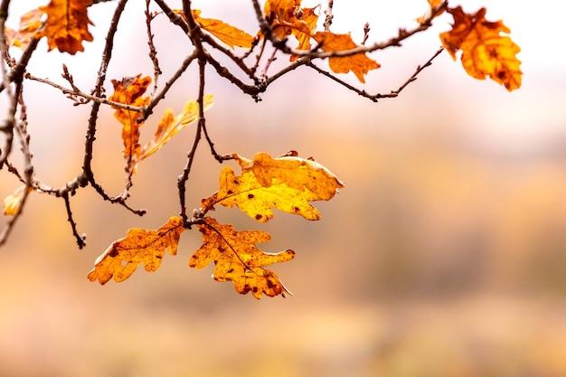 Heldere herfst eikenbladeren op een tak in warme kleuren