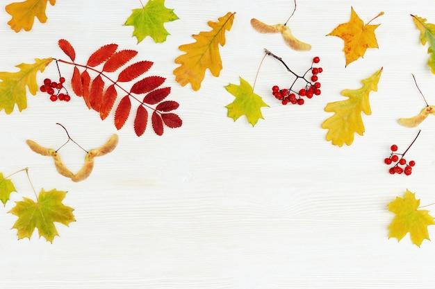 Heldere herfstbladeren van lijsterbes, eik, esdoornbomen, lijsterbessen op witte houten achtergrond met exemplaarruimte. bovenaanzicht. herfst thema.
