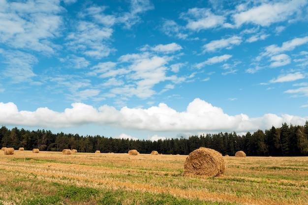 Heldere herfsthemel boven veld met gele hooirollen