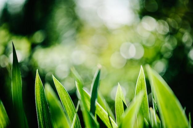 Heldere irisbloemen op een achtergrond