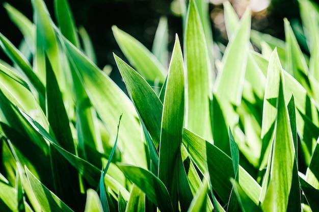 Heldere irisbloemen.