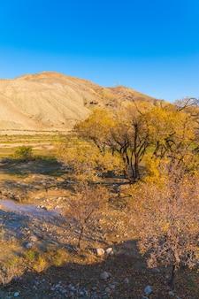 Heldere kleurrijke herfst in de bergen