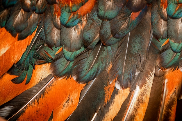 Heldere kleurrijke veren van een vogel