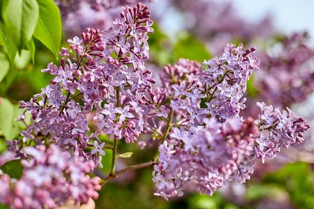 Heldere lila bloemen en blauwe hemel