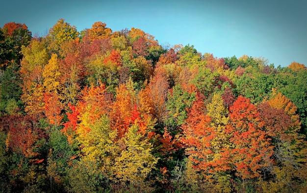 Heldere meerdere herfstkleuren. oranje, groen, rood en felgeel. schilderachtige veelkleurige bossen