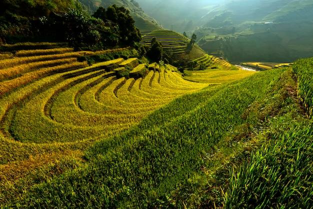 Heldere ochtend van rijstterrassen