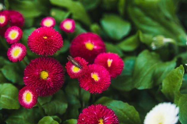 Heldere rode bloemen op een groen gazon