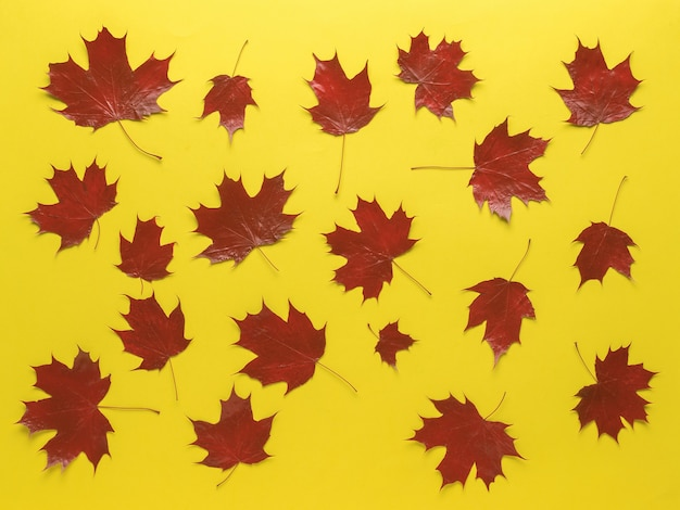 Heldere rode herfst esdoorn bladeren op een gele achtergrond.