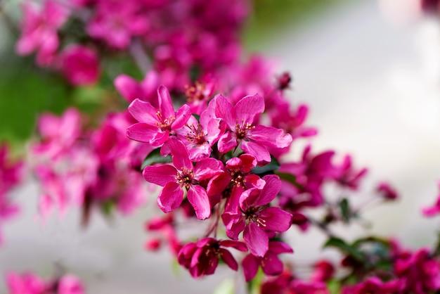 Heldere roze bloesembloemen met groene bladeren