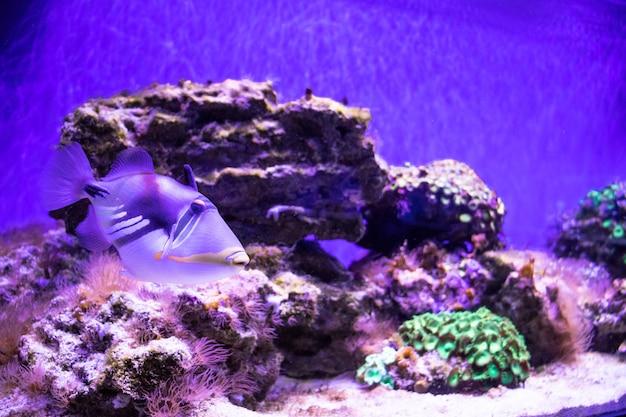 Heldere tropische vissen op een koraalrif een grote zwerm vissen zwemt onder water