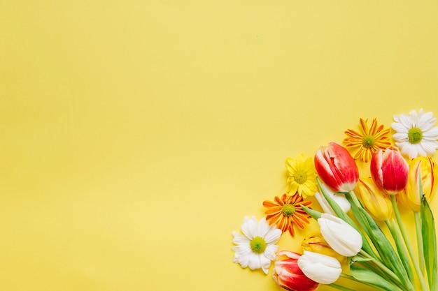 Heldere tulpen met madeliefjes in de hoek