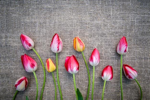 Heldere tulpen op canvas achtergrond