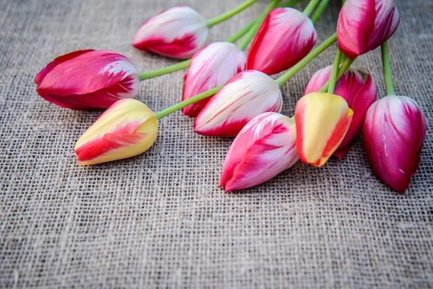 Heldere tulpen op een achtergrond van jute
