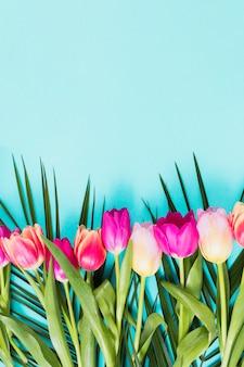 Heldere tulpenbloemen op blauwe lijst