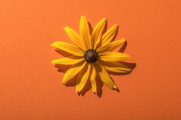 Heldere zomer gele bloem op een oranje achtergrond in fel licht. plat leggen.
