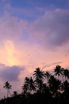 Heldere zonsonderganghemel in de keerkringensilhouetten van palmen tegen een roze purpere hemel