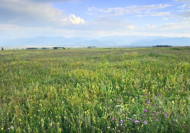 Heldergele en paarse bloemen op een groene weide tegen de achtergrond van bergen in een waas onder een blauwe bewolkte hemel. altaj, siberië, rusland
