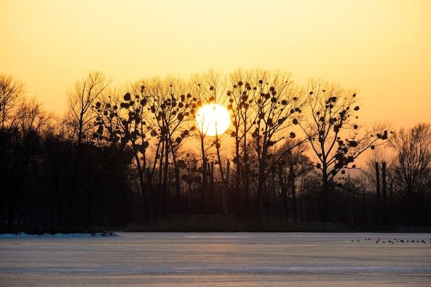 Heldergele ondergaande zon achter zwarte bate bomen.
