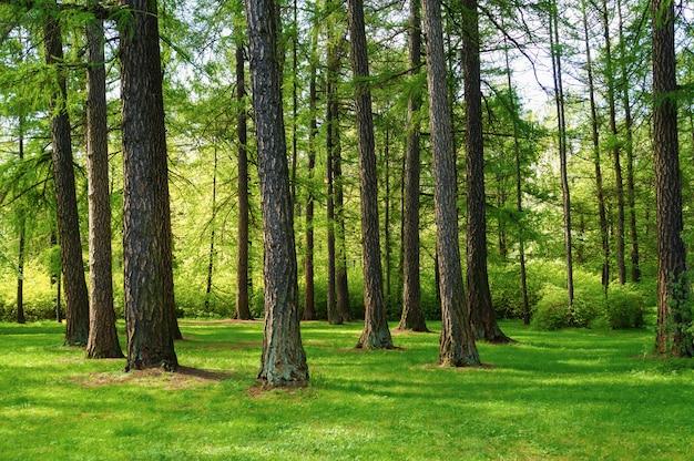 Heldergroen natuurlijk de lentelandschap met bomen in het park