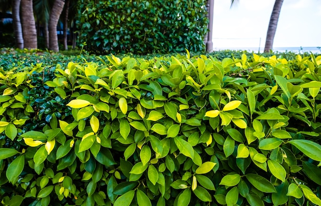 Heldergroene bladeren van tropische planten in de tuin in de buurt van de zee in zonnige zomerdag.