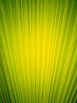 Heldergroene stevige palmbladachtergrond