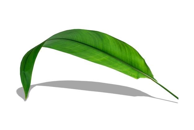 Heldergroene tropische bladeren lagen op een witte achtergrond met zwarte schaduwen