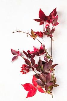 Helderrode bladeren van wilde wijnstok parthenocissus, victoria klimplant bladeren. frame met herfstbladeren.