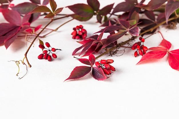 Helderrode bladeren van wilde wijnstok parthenocissus, victoria klimplant bladeren. mooie herfst.