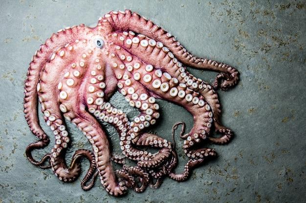 Hele verse rauwe octopus op grijze lei