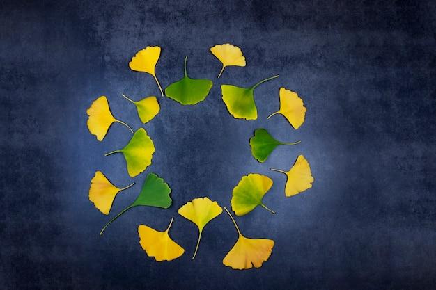 Helende gele en groene ginkgo-bladeren ter herinnering aan een lang leven en gezondheid in de traditionele oosterse geneeskunde liggen in een cirkel op een donkere achtergrond