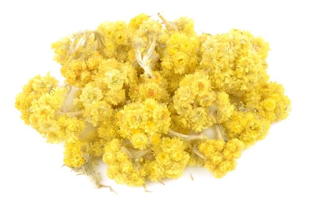 Helichrysum bloemen
