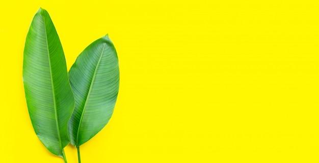 Heliconia bladeren op gele achtergrond. kopieer ruimte