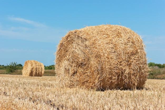 Hellend gebied van stro van de tarwe het grote stapel